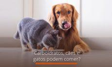 Carboidratos, cães e gatos podem comer?