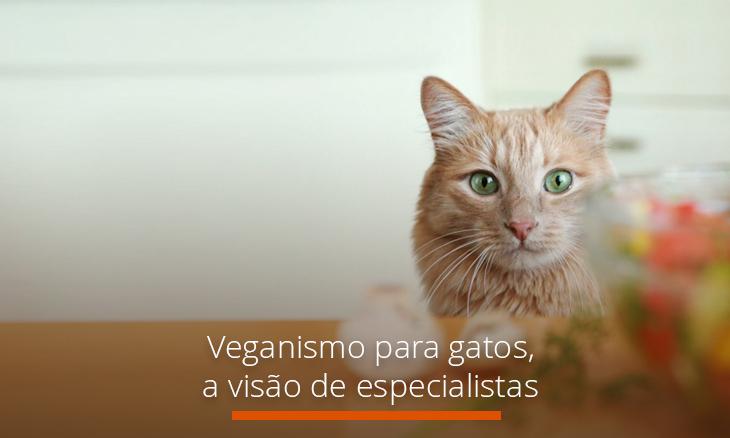 Veganismo para gatos a visão de especialistas